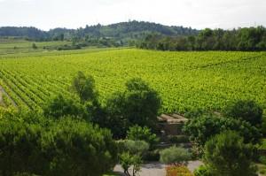 Languedoc Vineyard