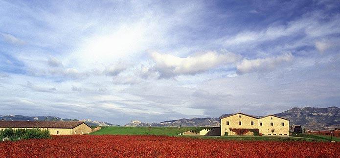 La Rioja Alta Vineyard