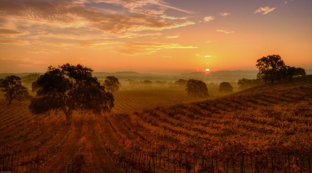 Peachy Canyon Vineyard at Sunrise