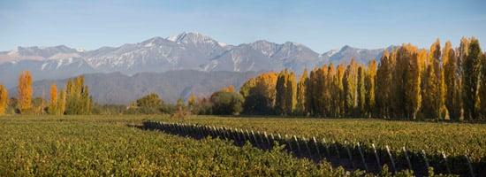 Jamilla's Vineyard