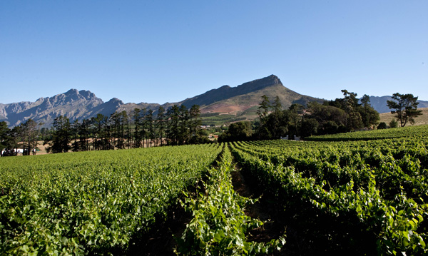 South African Wines: Where the Quality and Values Are