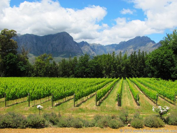South-African-Vineyard