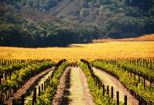 Great California Wines From Off the Beaten Path