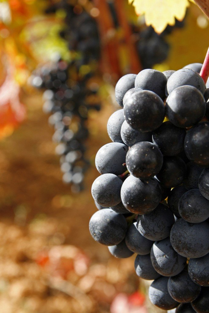 The Best Red Wines from Spain