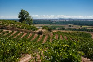 Ribera del Duero: Great Wines From the Heart and Soul of Spain