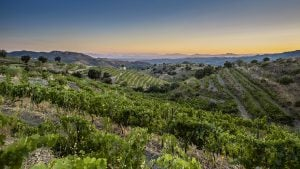 Spain's Priorat and Montsant: Red Wines That Over-Deliver