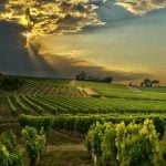 Languedoc: France's Answer to Tariffs and Over-Priced Wines