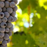 Cabernet Sauvignon: The King of Wines